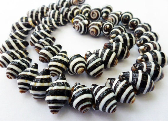 63 or more Medium Natural Black and White Pyrene Shell Beads