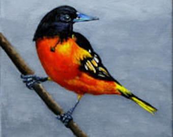 Baltimore Oriole, Bird,   Acrylic Original Art Painting,  8 x 10