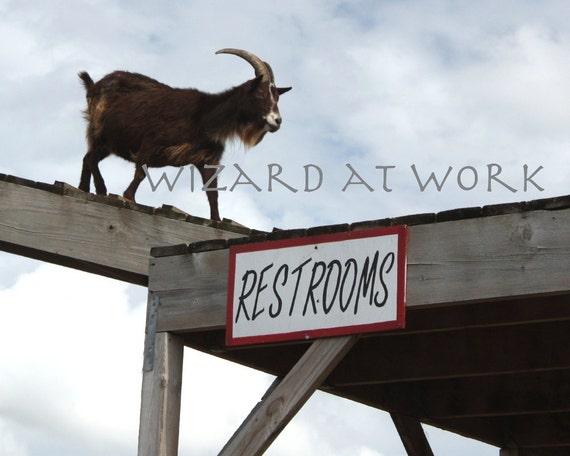 Goat's Gotta Go - 8x10 photograph - bathroom, restroom, silly, funny, photo, sign