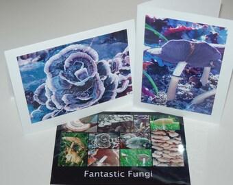 Fantastic Fungi can be beautiful  NC0012