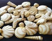 Gumpaste Seashells 20 Piece Edible