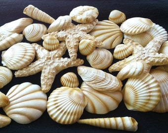 20 Piece Edible Gum Paste Seashells