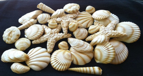 Seashells 20 Piece Edible Gum Paste Cake Decorations