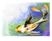 Koi - Signed, Limited Edition 6/100 Archival Giclee Print 14x11 in.