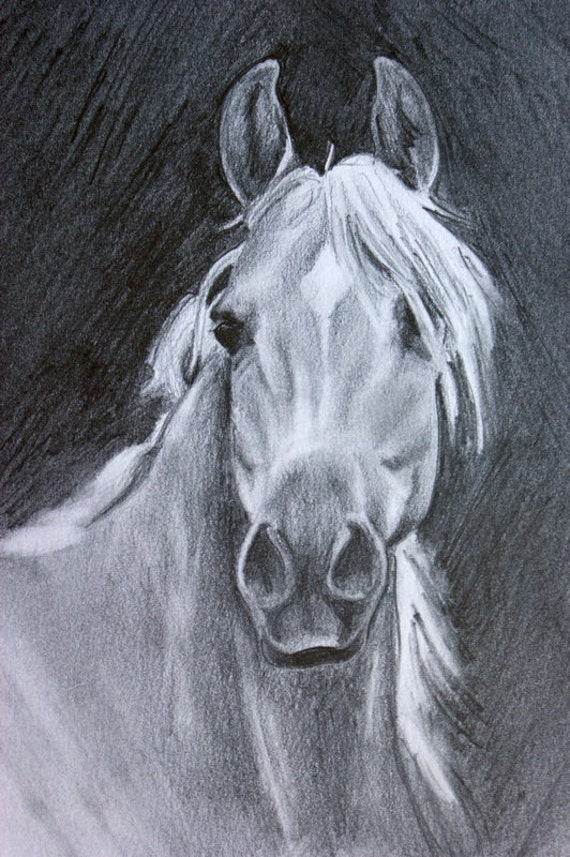 Arabian Horse Art Original Pencil Drawing Equine Portrait beautiful horse grey gray