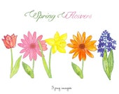 CLIP ART - Spring Flowers - for commercial and personal use