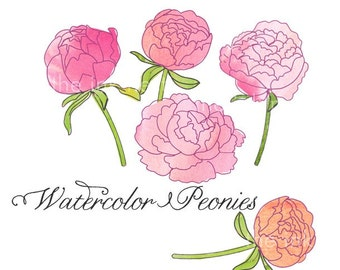 CLIP ART - Watercolor Peonies - for commercial and personal use