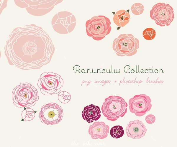 CLIP ART and Photoshop brushes Ranunculus Collection for