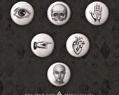 Anatomy Button Set - Six One Inch Pins