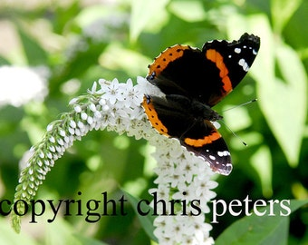 Photo Notecard, butterfly, flower, free shipping, chris peters, mementos of the journey