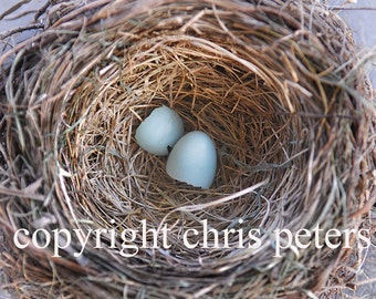 Photo Note card bird nest free shipping chris peters mementos of the journey