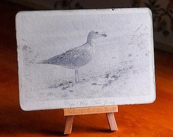 Seagull on beach vintage photo postcard