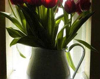 Photo note card, flower, tulips, free shipping, chris peters, mementos of the journey