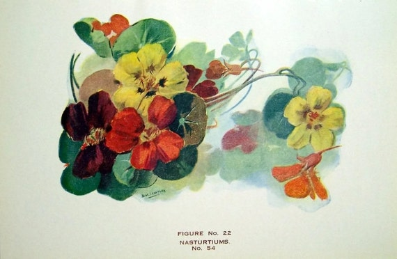Vintage Book Plate Nasturtiums Flower Decor