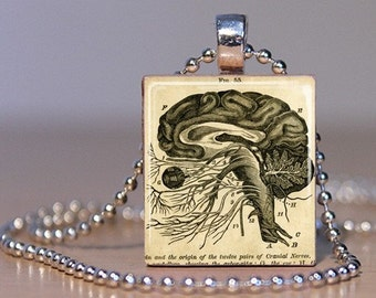 Vintage Brain Anatomy Cross-section from a Medical Book made into a Pendant on an Upcycled Scrabble Tile (70A5)