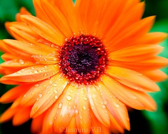 Fine Art Photography Print Wall Decor Orange Flower Landscape Nature Woodland Calm Spring Summer Green