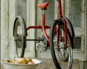 Amelie's tricycle 7x5 art photo print, red trike, bike, bicycle