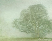 Embraced by snow and mist. Fog and snow  5x7 art photo print