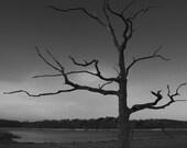 Petrified, frozen dead tree 7x5 Halloween, moody and eerie coast scene in b&w