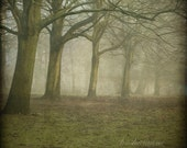 Edge of the forest, winter 8x8 gothic photo print, misty, foggy trees