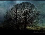 Moonlit embrace  8x12 Fine art photography print, night trees, spooky, halloween