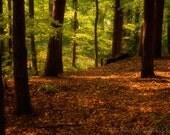 Dreamy woodland forest depths 10x15 art photograph, trees, bluebells