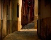 The alley cat  8 x 8 Fine art photography print, Slovenije