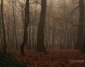Misty, foggy, 8x12 November moody forest woodland scene