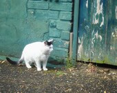 Catsteps 8x8 fine art photo print