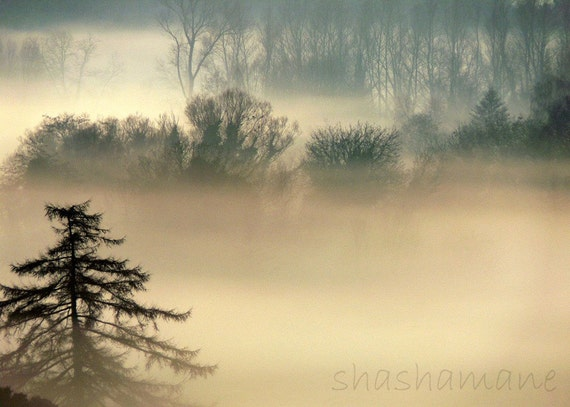 Tolkienesque. Mystical and magical misty woodland forest scene 5x7 Fine Art Photography Print  - Middle Earth fog