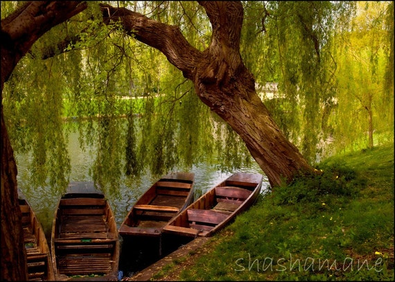 Resting. Cambridge river boat 5x7 art photo print, spring, moored boats, gondolas