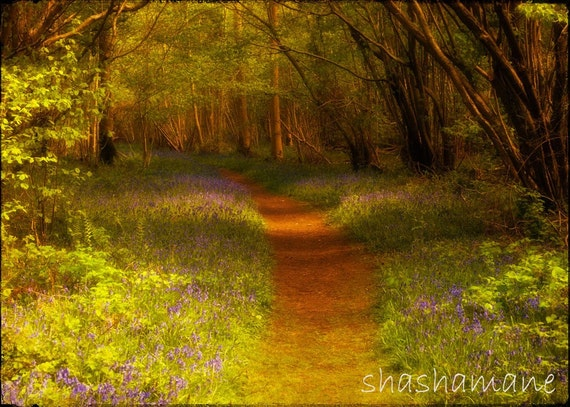 The path to spring  5 x 7 fine art photo print, Bluebell wood