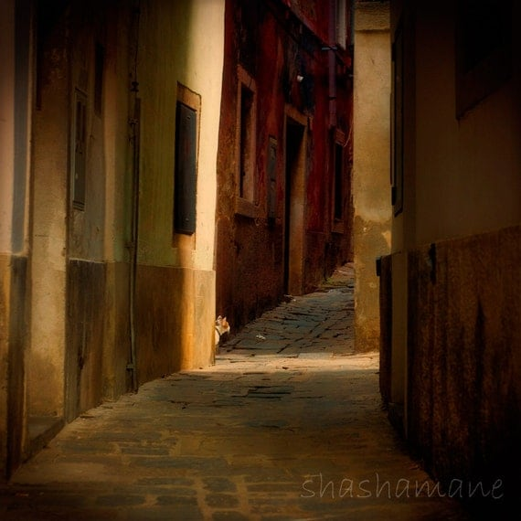 The alley cat  8 x 8 Fine art photography print, Slovenije