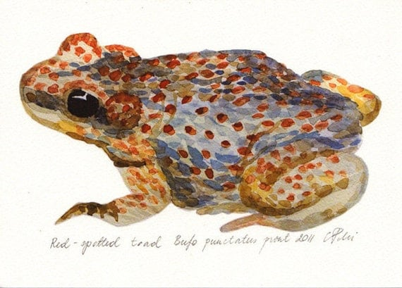 Watercolor frog art, Toad illustration, Woodland frog, Gift for her, Blue brown toad, Home wall decor, Frog drawing, Nursery art, Art gift
