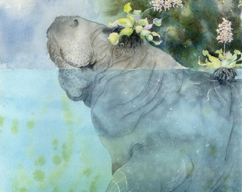 PRINT of a gorgeous manatee 8 x 10 Manatees New Hat bowman open edition seacow portrait
