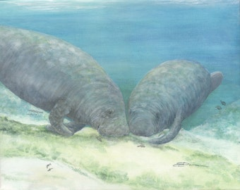 Print open edition 8 by 10 Florida manatee bowman sea cow portrait Grubbing For Roots mermaid