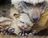 CUDDLE BABY ANIMALS - Set of Four Photo Prints 8 X 10- Fox, Cheetah, Grizzly Bear, Giraffe - Wildlife Photography, Wall Decor, Nursery Art