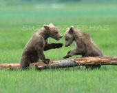 BABY BEARS Playing Photo ...