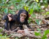 Cute Baby Chimpanzee Photo Print, Baby Animal Photograph, Wildlife Photography,  Baby Nursery Art, Jungle, Monkey, Chimp, Safari Nursery