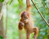JUNGLE BABY ANIMAL Photography, Set of 3 Photo Prints, Orangutan, Gorilla, Chimpanzee, Wildlife Photography, Baby Monkey, Safari Nursery Art