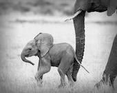 12 X 18,  Set of 4 Signed Black & White Photos, SAFARI BABY ANIMALS, Elephant, Lion, Cheetah, Giraffe, African Wildlife Photography, Nursery