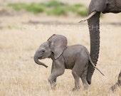 ANIMAL GREETING CARDS, Set of 4, Blank Greeting Cards, Baby Animal Photograph, Wildlife,  Safari, cheetah, giraffe, lion, elephant, zoo