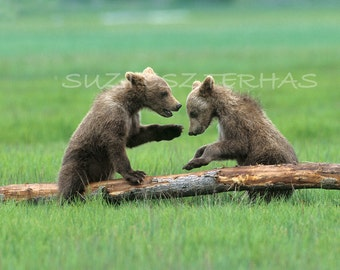 BABY BEARS Playing Photo Print, Baby Animal Photograph, Wildlife Photography, Kids Room Decor, Safari Nursery Art, Green, Grizzly Bear, Cub