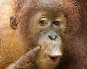 FUNNY ORANGUTAN BABY Photo- 8 X 10 Print - Baby Animal Photograph, Wildlife Photography, Wall Decor, Nursery Art, Monkey, Cute