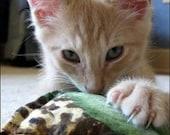 Set of 6 Stinky Catnip Toys