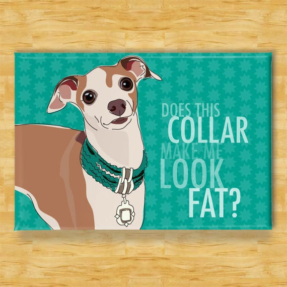 Italian Greyhound Dog Magnet - Does This Collar Make Me Look Fat