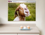 Wrapped Canvas Print, Living Room Decor, Kitchen Decor, The Smiling Goat (Netherlands) Wall Art 12x16 (30x40 cm) Farm Fresh home decor