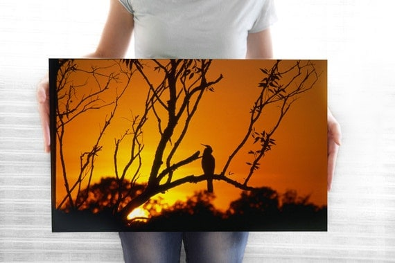 Under 50 Gift Wrapped Canvas Print: Bird at Sunset, Australia. Fine Art Film Photograph, 15.4x25.2 inches, Ready to hang, forest