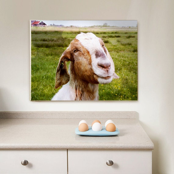 Wrapped Canvas Print, Living Room Decor, Kitchen Decor, The Smiling Goat (Netherlands) Wall Art 12x16 (30x40 cm) Farm Fresh home decor