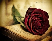 Rose Red - Fine Art Photography Print, Vintage Book Red Rose Romantic Photography Wall Art Photo Print, Gold Red Wall Art Home Decor, Art